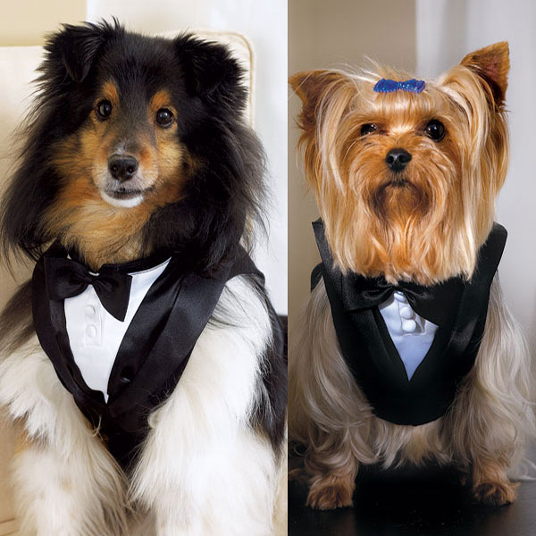 Montreal Weddings Tuxedo for pets