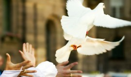 MONTREAL WEDDING DOVE RELEASE