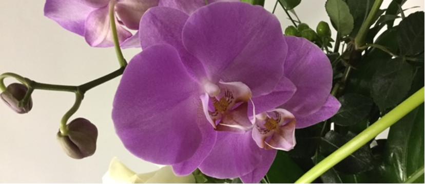 mariage-montreal-marché-aux-fleurs (12)